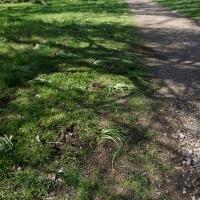 2017-04-09 Ickworth Park 14