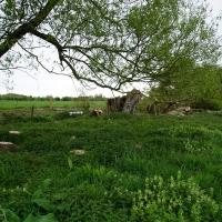 2017-04-23 Dedham Hall Farm 23
