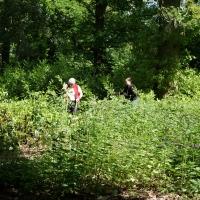 2017-05-21 Ickworth Park 04