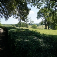 2017-07-02 Ickworth Park 17