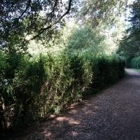 2017-08-13 Ickworth Park 01