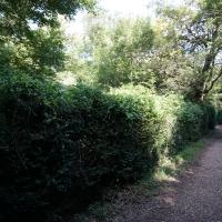 2017-08-13 Ickworth Park 02
