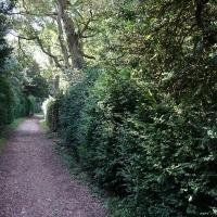 2017-08-13 Ickworth Park 03