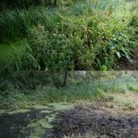 2017-09-10 Flatford Mill 03