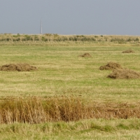 2017-09-24 Orford Ness 09